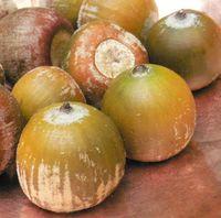 Small acorn pic