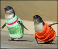Penguinsweaters_150_1